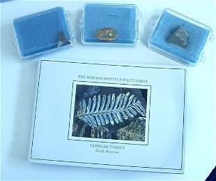 Fossil Starter Kit w/192 Page Audubon Book