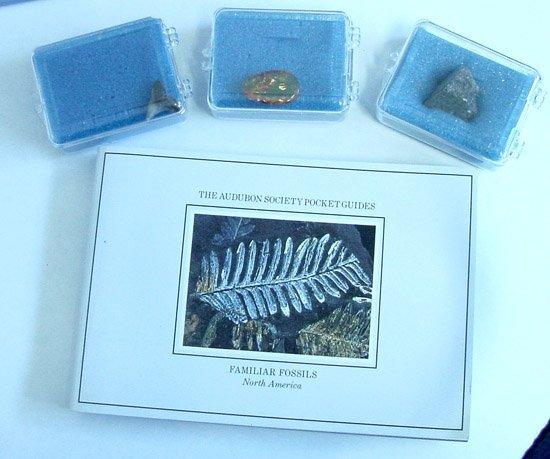 2010: Fossil Starter Kit w/192 Page Audubon Book