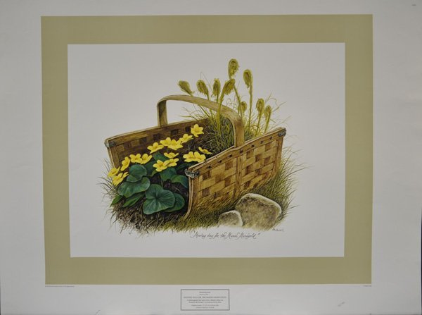 Moving Day for the Marsh Marigolds by Harold McIntosh
