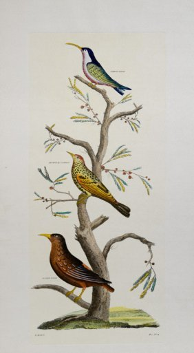 Birds I. by D. Diderot