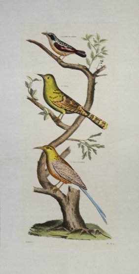 Birds II. by D.Diderot