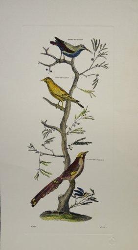 Birds III by D. Diderot