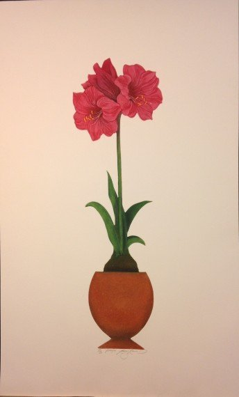 Amaryllis by Nancy Kevin