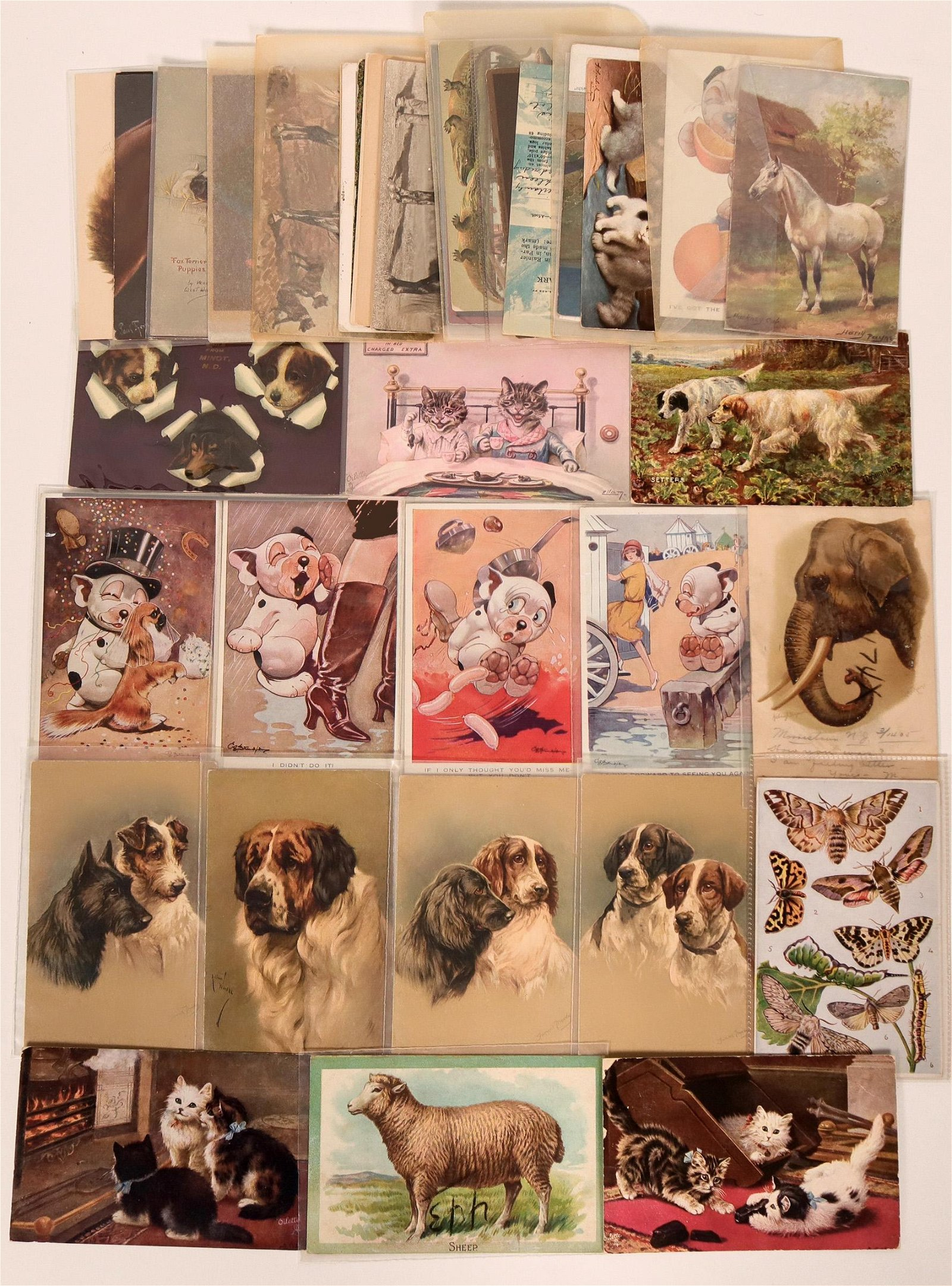 Animal Postcards Group (40)  (111693)