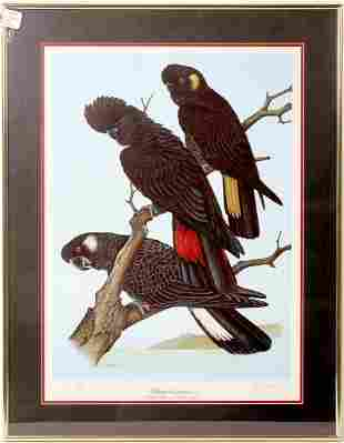 Beautiful Collection of Framed Bird Prints - 3