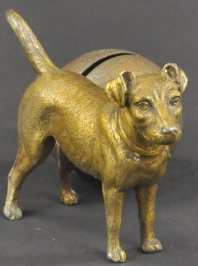 Jack Russell Terrier By Ball Spelter Bank
