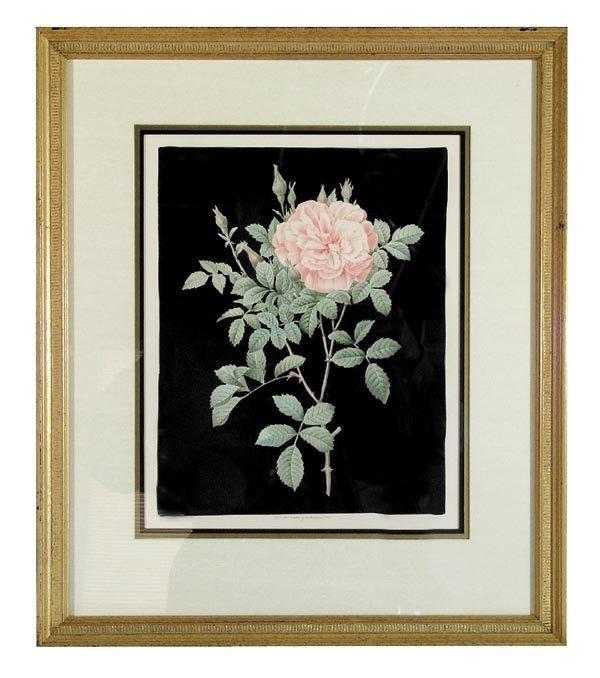 """1019: Set of 6 Framed """"Redoute Roses"""""""