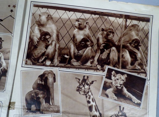 1933 Ringling Bros Barnum Bailey Circus Courier - 4
