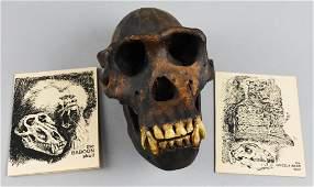 Skullduggery Replica Baboon Skull