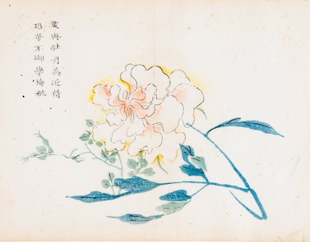 FLOWERING PEONY