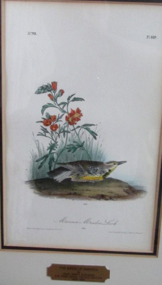 Audubon Missouri Meadow Lark Print