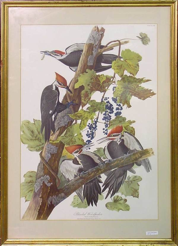 1016: Pileated Woodpecker Print