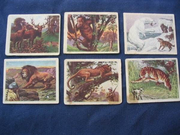 "18: (6) 1940's ""Hunted Animals"" Cards Wilkes-Barre PA."