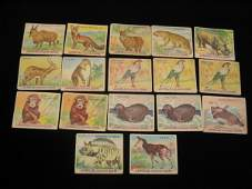 4006: (17) Jungle Chewing Gum, Wild Animal Cards