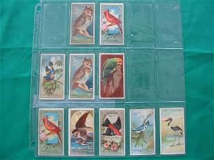Allen & Ginter 19th Century Bird Tobacco Cards