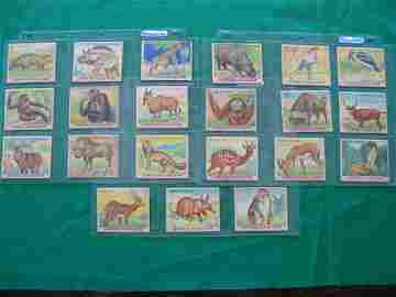 1071: Jungle Chewing Gum 1930's Partial Set of 21 Cards