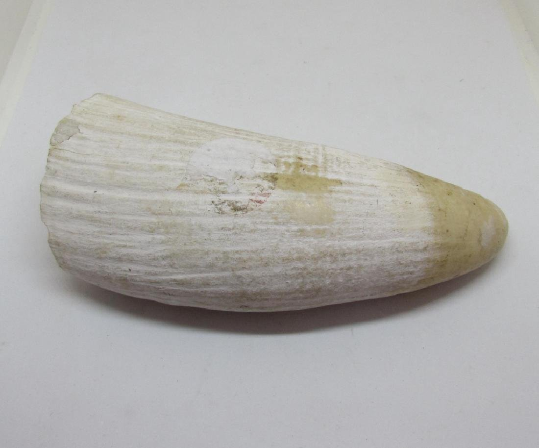 WHALE'S TOOTH