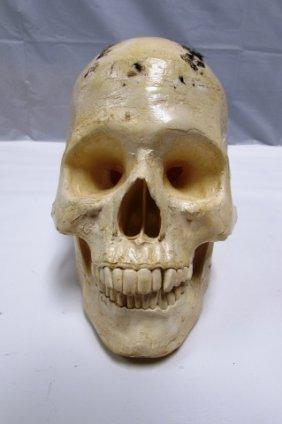 Human Skull Medical Model
