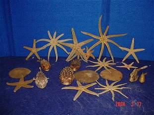 Box of sea creatures