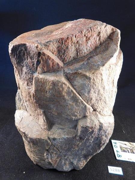 DINOSAUR BONE UTAH 40LB