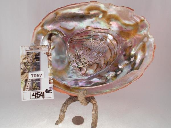 ABALONE SHELL LAPIDARY MOTHER OF PEARL - 2