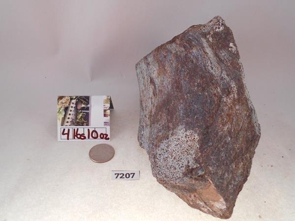 DINOSAUR FOSSIL FOSSILIZED BONE ROCK STONE LAPIDARY - 2