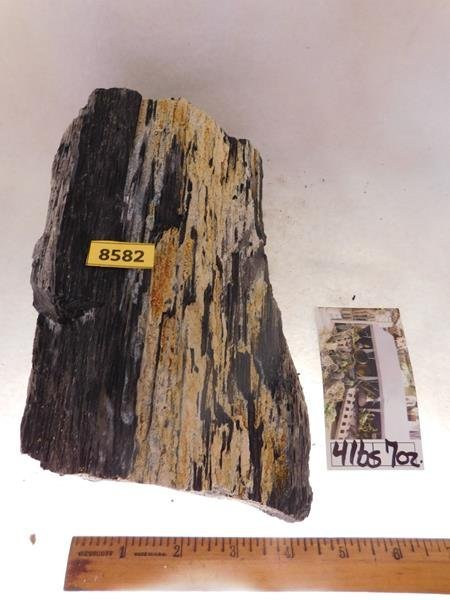 PETRIFIED WOOD ROCK STONE LAPIDARY SPECIMEN HUGE 47 LB - 2