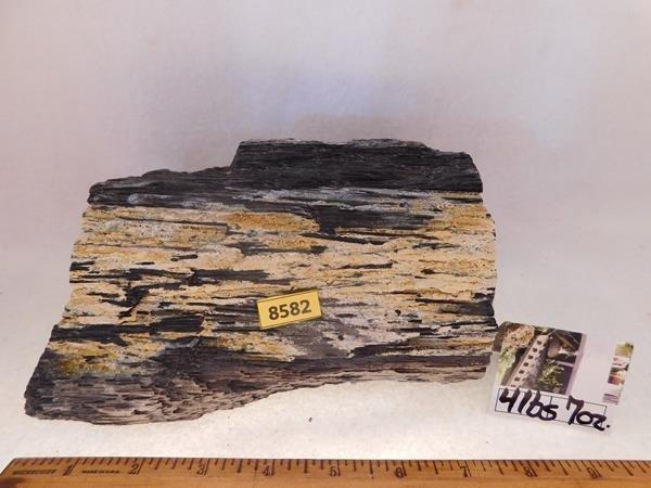 PETRIFIED WOOD ROCK STONE LAPIDARY SPECIMEN HUGE 47 LB - 4