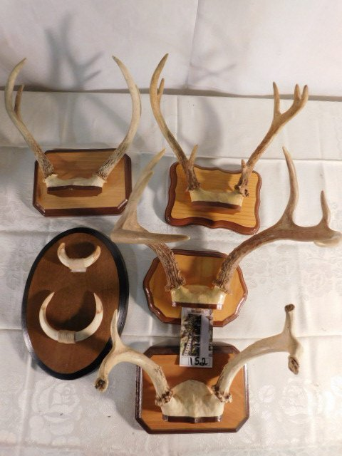 MISC MOUNTED ANTLERS