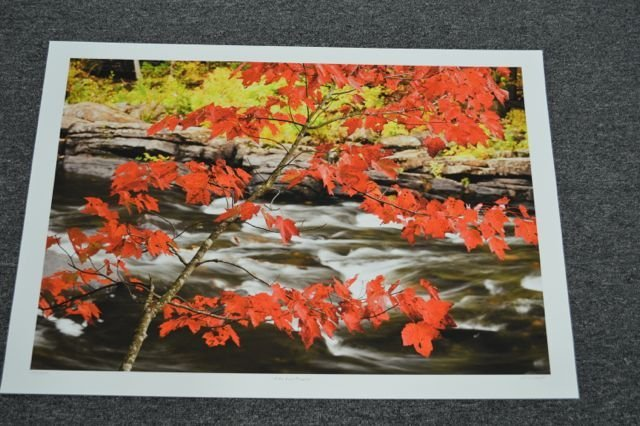 "Andrew Collett ""Red Maple"""" Limited Edition  Litho -"