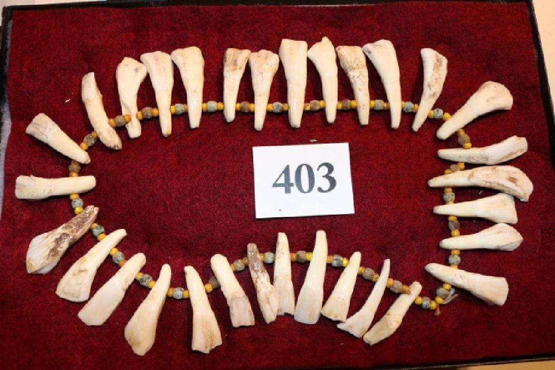 Horse Tooth & Trade Bead Necklace