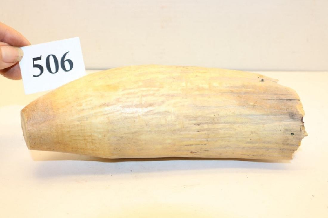 "8 ½"" Whales Tooth - 2"