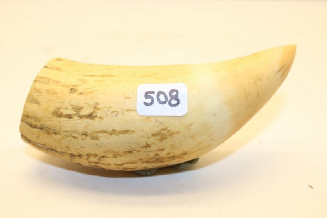 """4 ¾"""" Whales Tooth"""