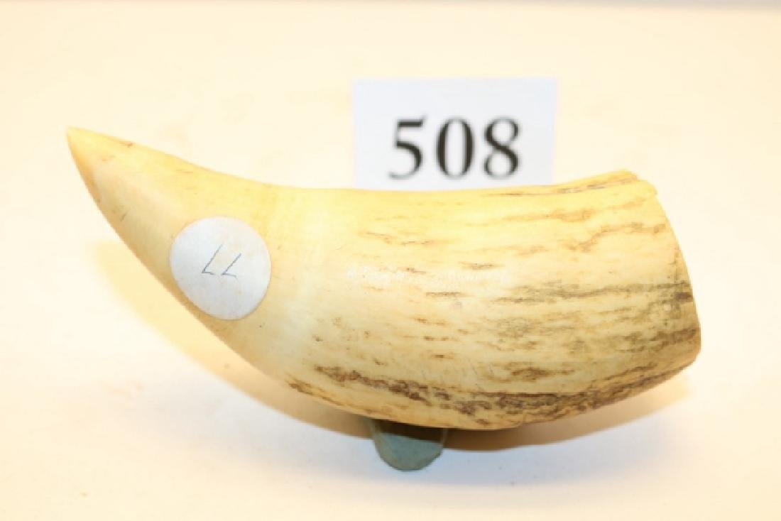 """4 ¾"""" Whales Tooth - 2"""