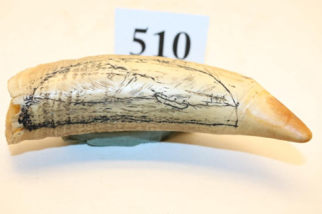 "4 ¾"" Whales Tooth - 2"