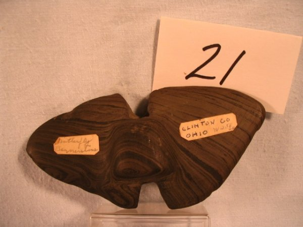 """21: 4 1/2"""" Banded Slate Butterfly Bannerstone"""
