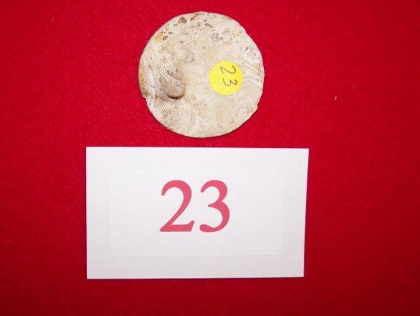 23: Girant Shell Ear Spool