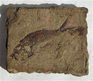 Antique Fish Fossil