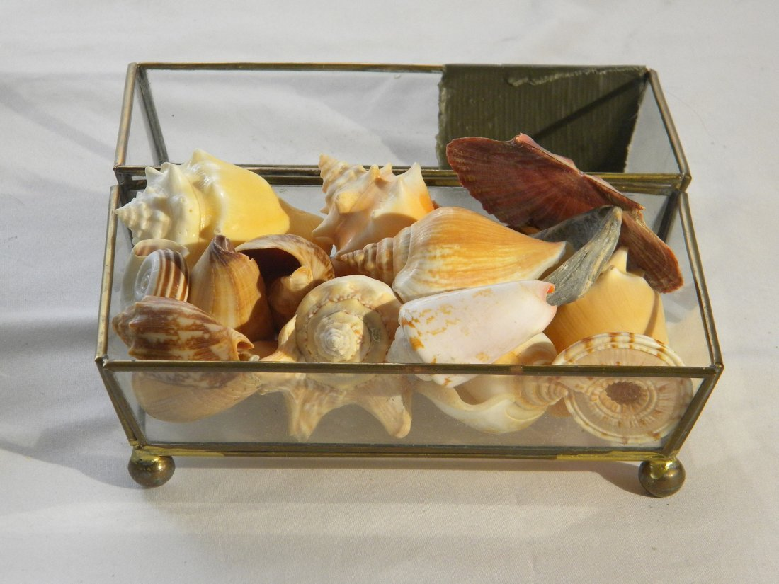 A GLASS BOX FULL OF RARE SHELLS