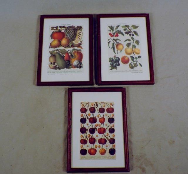3 Fruit Print
