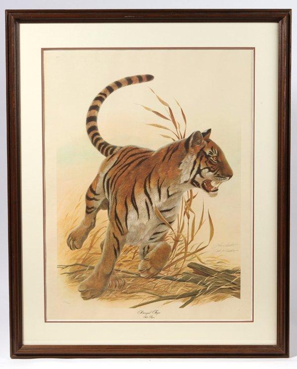 "John A. Ruthven (Ohio) Print ""Bengal Tiger"""