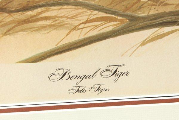 "John A. Ruthven (Ohio) Print ""Bengal Tiger"" - 4"