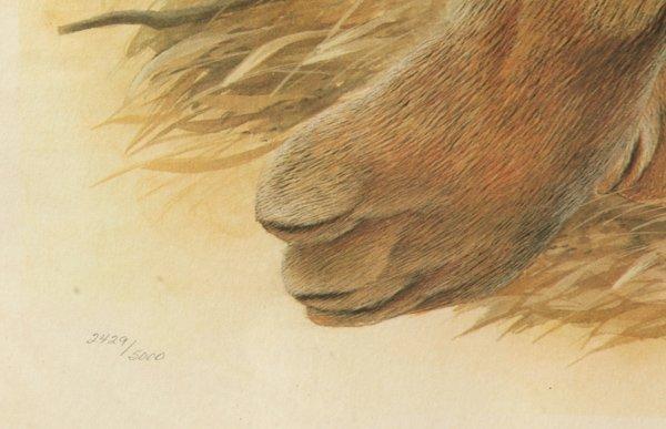 "John A. Ruthven (Ohio) Print ""Bengal Tiger"" - 5"