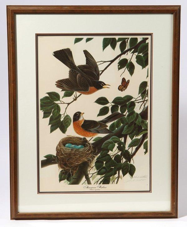 "John A. Ruthven (Ohio) Print ""American Robins"""