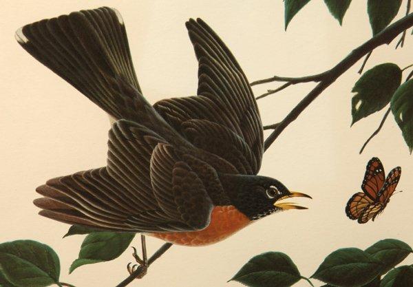 "John A. Ruthven (Ohio) Print ""American Robins"" - 2"