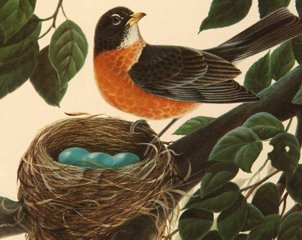 "John A. Ruthven (Ohio) Print ""American Robins"" - 3"