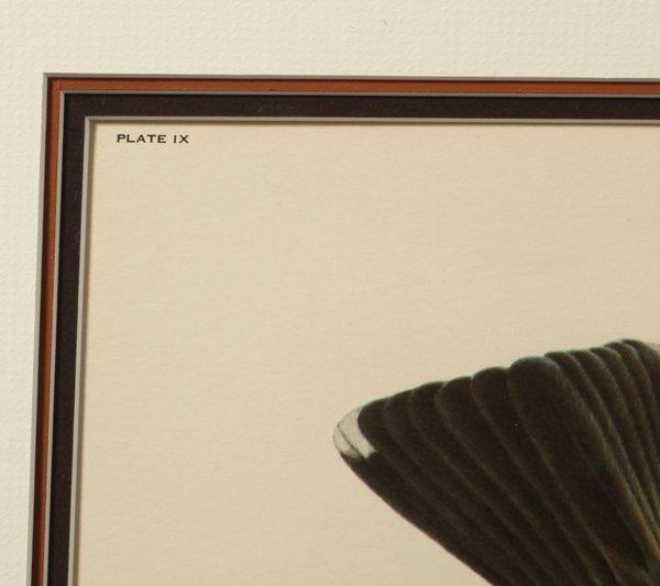 "John A. Ruthven (Ohio) Print ""American Robins"" - 6"