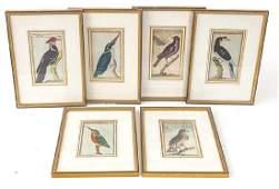 Six 18th Century German Hand Colored Bird Engravings
