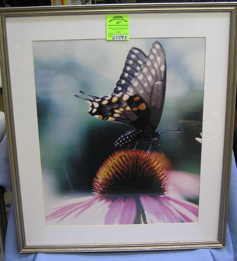 High quality butterfly and flower print