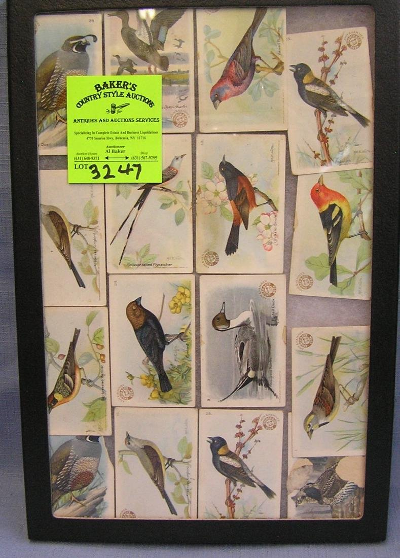 Collection of early birds of the world cards